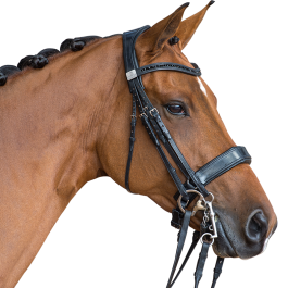 Fairfax Performance Double Bridle